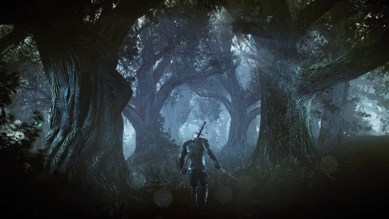 the-witcher-3-wild-hunt-woods-800x450-c
